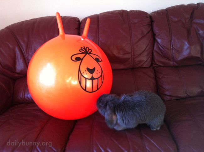 Bunny meets an unusual friend - March 5, 2014