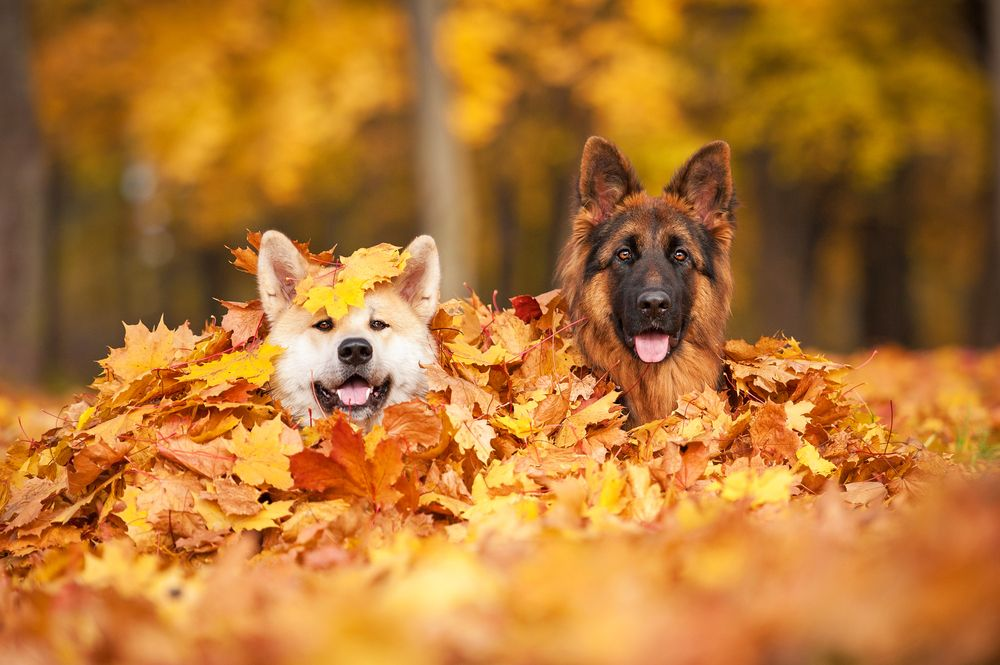 10 Cute Dogs That Have A Lot To Say About Fall Leaves Puppy