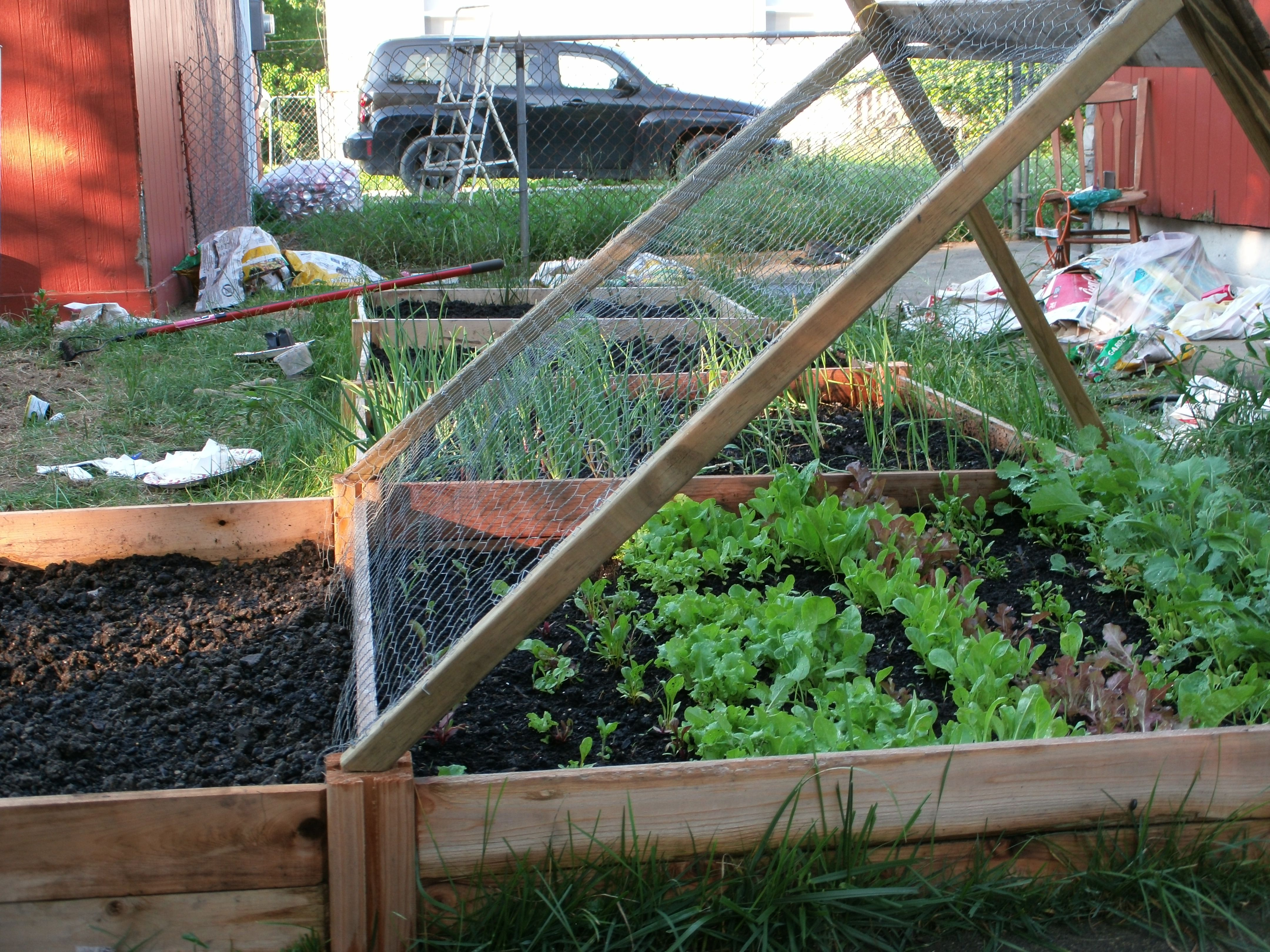 My version of the cucumber shade trellis for lettuce... got the idea on pinterest!