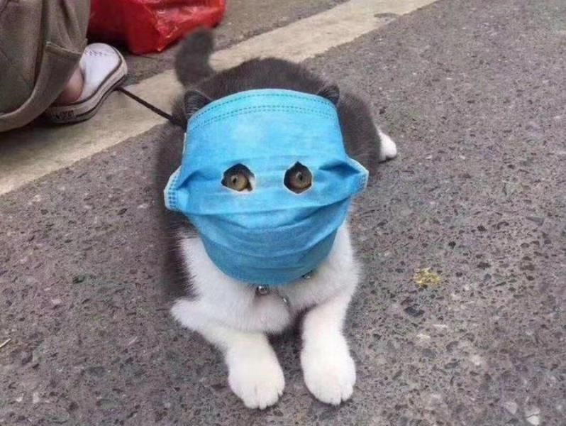 Cat In A Medical Mask In 2020 Fish Cat Toy Cat Pics Cats