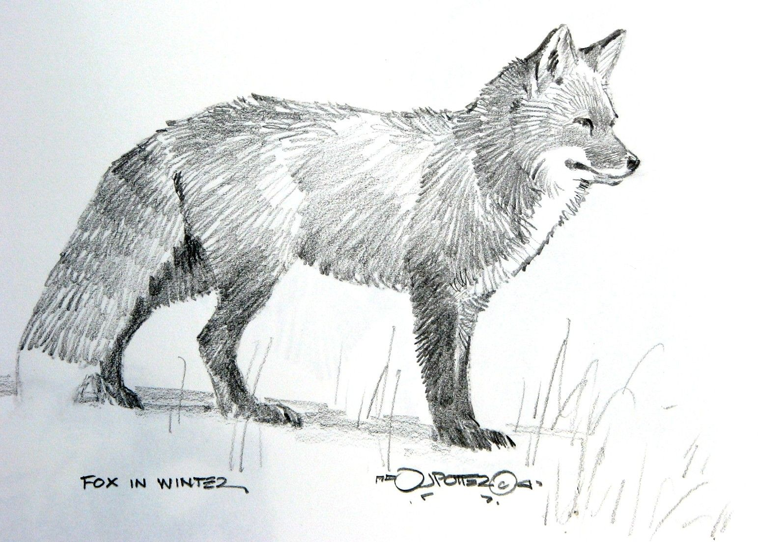 This is a photo of Crazy Fox Pencil Drawing