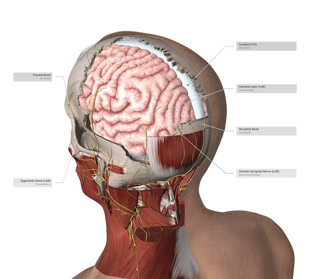 Complete Anatomy Lab http://completeanatomy.3d4medical.com/esper.php ...