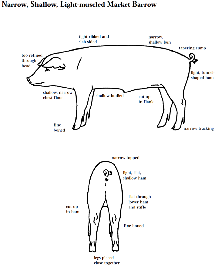 4 H Pig Diagram Peterbilt Wiring Diagrams Learning Parts Email This Blogthis Share To Twitter Facebook