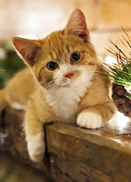 Oh my, this kitty is soooo cute and what a fabulous expression on his face don't you think?
