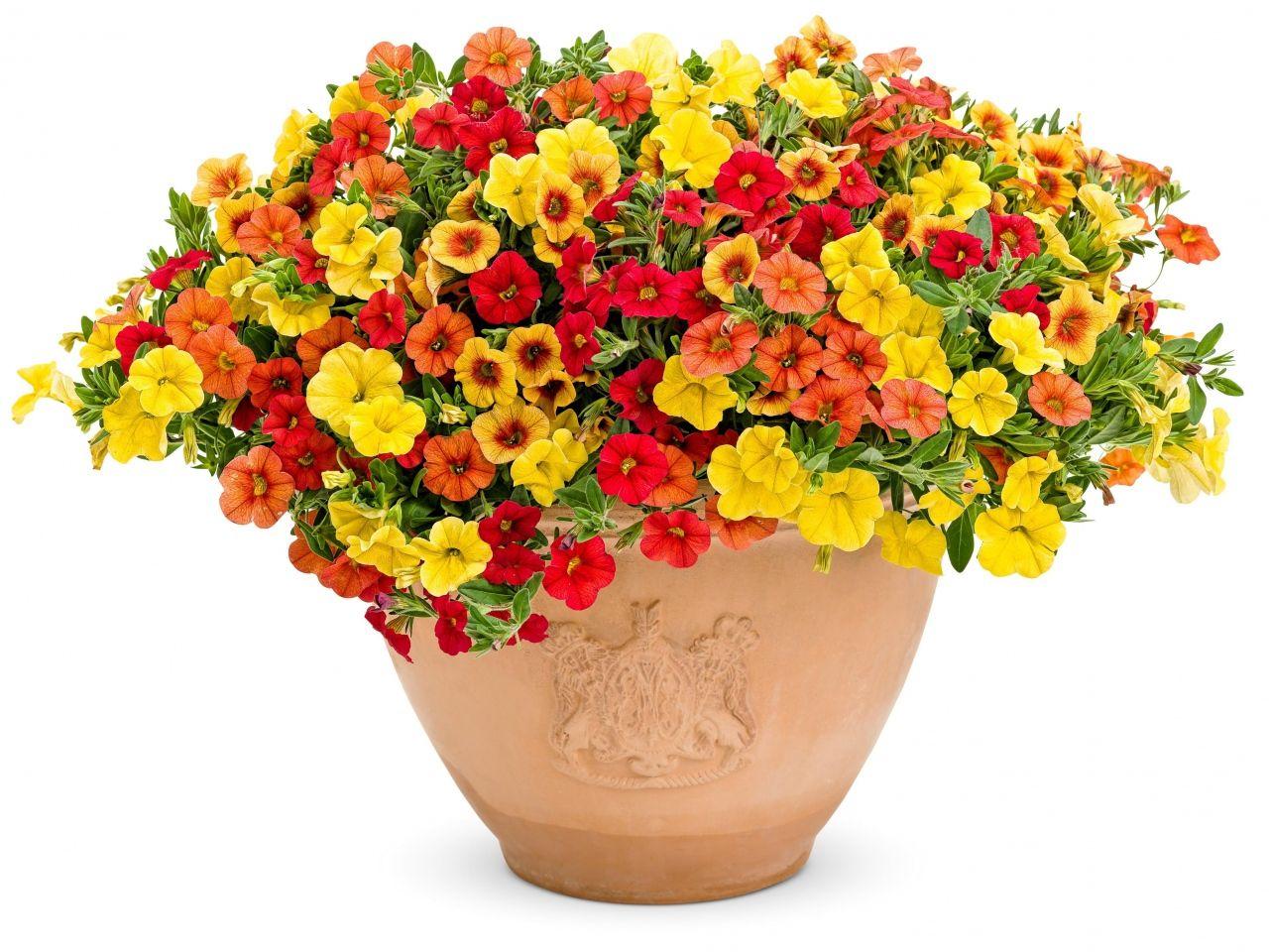 Resultado de imagen para macetas con flores recipientes for Plantas en macetas