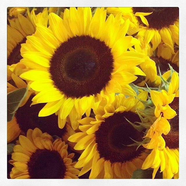 Sunflowers ~ photo by Miranda Kerr