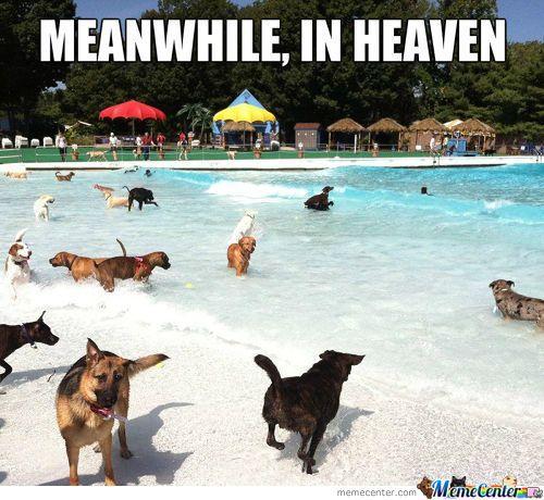 Meme Center Largest Creative Humor Community Dog Heaven Funny Animals I Love Dogs