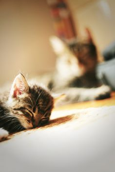 Sleeping Kitten 3 Cute Animals Cats And Kittens Crazy Cats