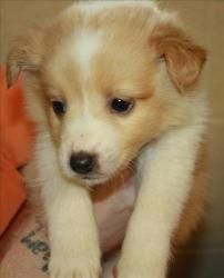 Adopt Jordan On With Images Cute Animals Cute Creatures Cute Puppies