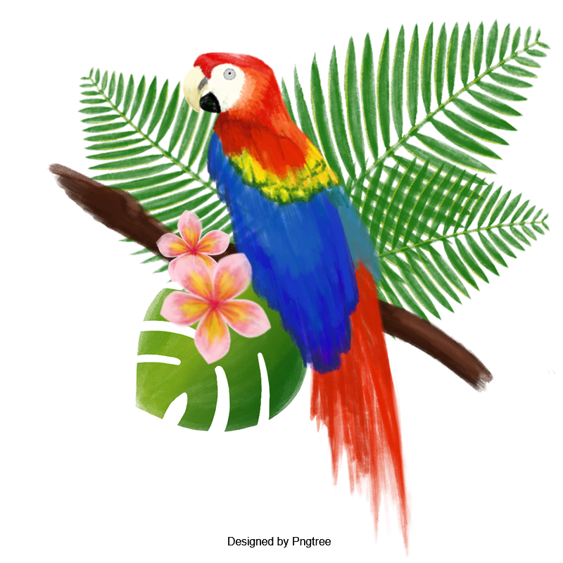 Hand Painted Watercolor Big Bird Poster Toucan Clipart Vector Material Toucan Png Transparent Clipart Image And Psd File For Free Download Bird Poster Paint Vector Bird