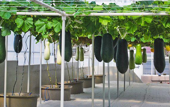 Vegetable Garden Ideas Layout Veggies