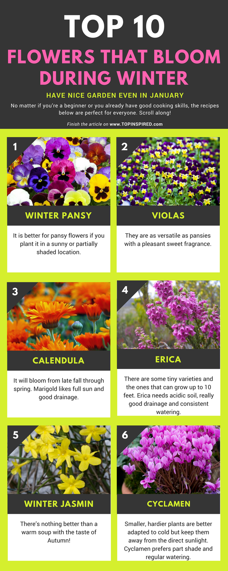 Top 10 Flowers That Bloom During Winter Top Inspired Winter Pansies Flower Garden Plans Winter Lawn