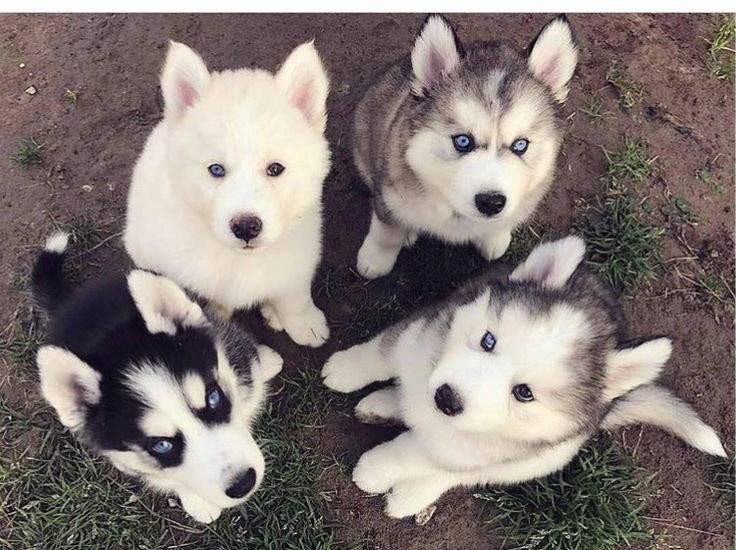 Love These Four Little Faces Cute Animals Animals Beautiful