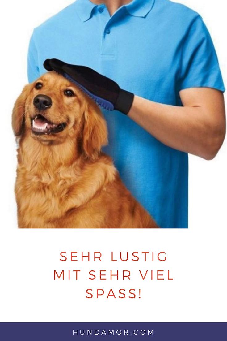 Hund Hundeblogger Hundeliebe Wissen Beschaftigung Spass