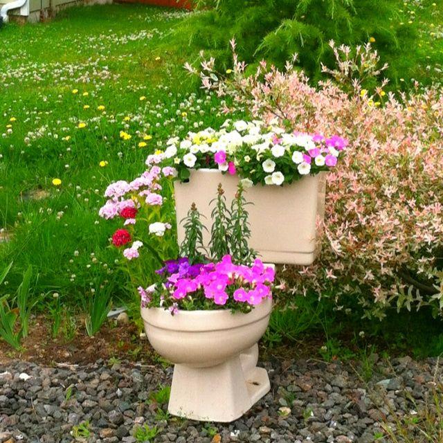 15 Amazing Spilling Flower Landscape Design Ideas: Toilet Bowl Flower Pot.