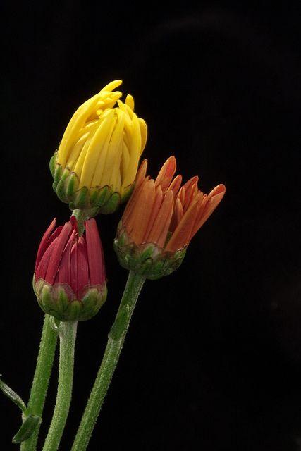 Colorful Bouquet by mclcbooks, via Flickr