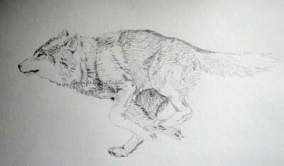 Running Wolf Tattoo Tattoos And Possible Ideas Wolf Tattoos