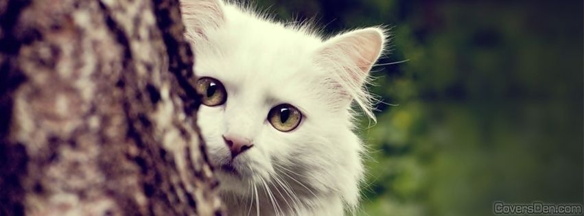 gatos fofos para facebook - Pesquisa Google