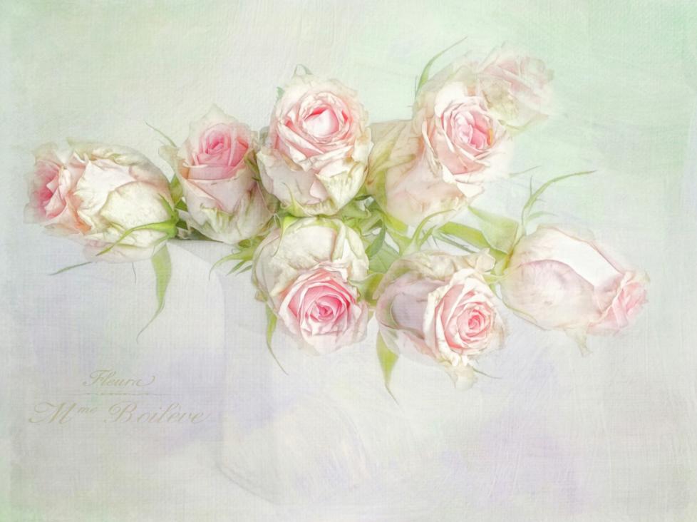 актуальную картинки розы в стиле шебби шик среди