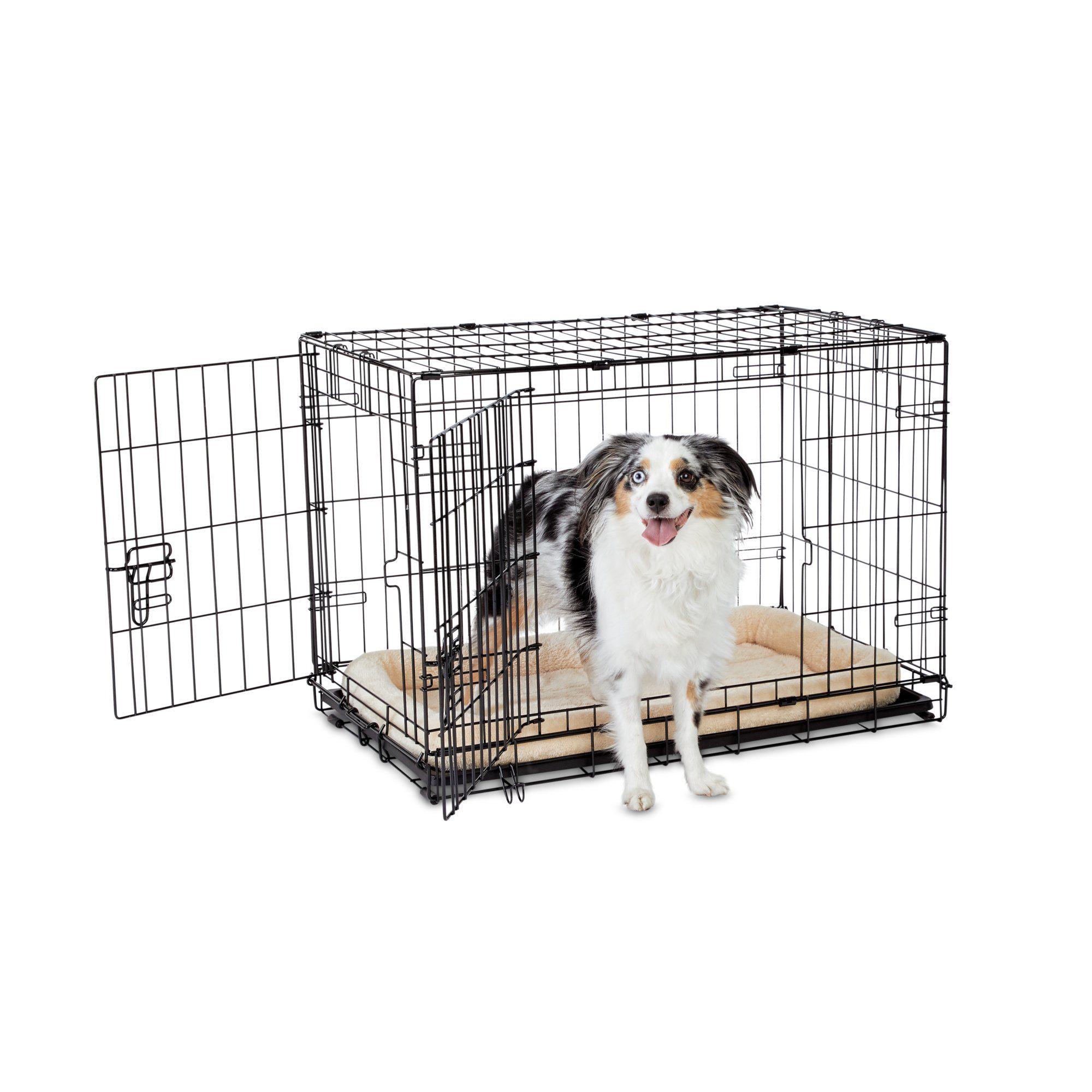 Animaze 2 Door Folding Dog Crate 30 5 L X 19 2 W X 21 5 H Folding Dog Crate Dog Crate Dogs