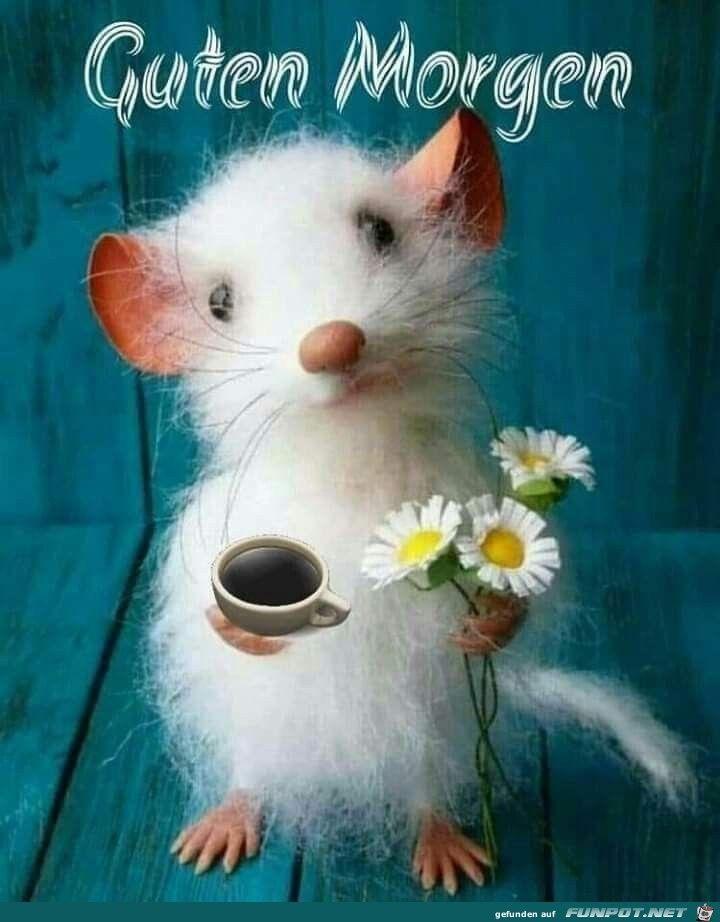 Guten Morgen Meine Maus