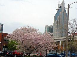 Jast Cherry Blossom Festival Japan America Society Of Tennessee Home Cherry Blossom Festival Nashville Trip Nashville