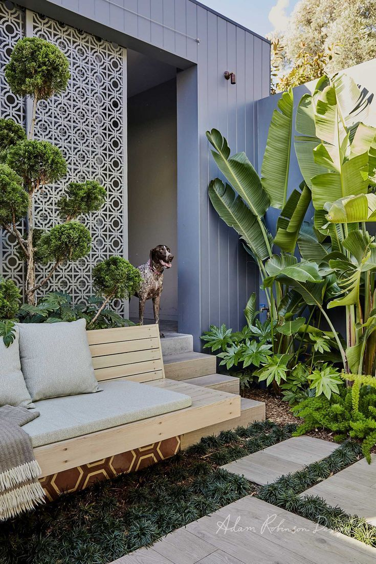 Balmain – Landscape Design project, landscaping, patio, outdoor living, palms, german shorthaired pointer dog