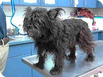 Tulsa Ok Cairn Terrier Mix Meet Alley A Dog For Adoption