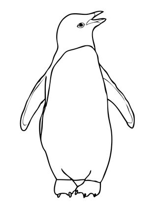 Galapagos Penguin Coloring Page
