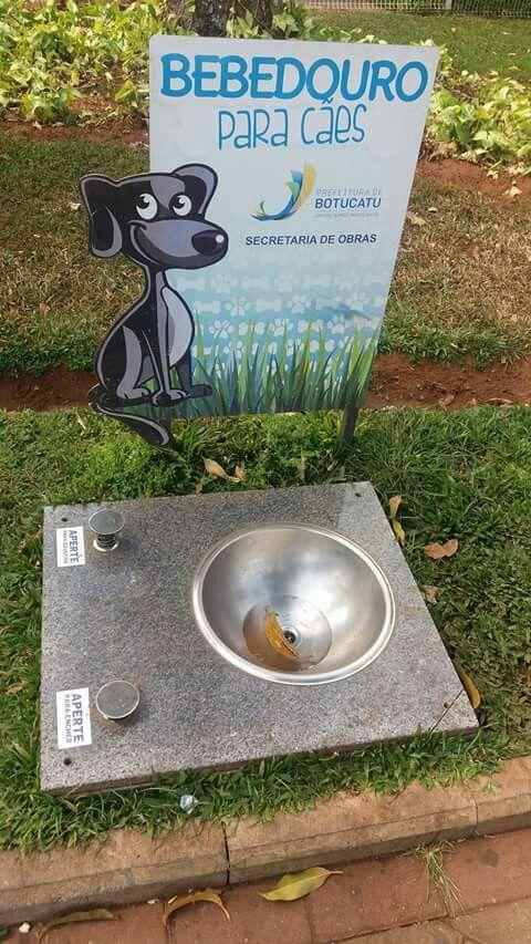 Bebedouro em Botucatu- 2016