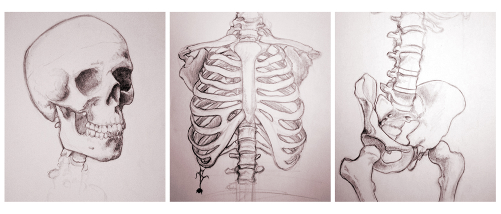 The Skeleton by Lylas.deviantart.com on @deviantART