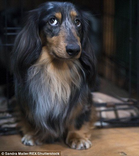 Thousands Of Dogs Arrive At Birmingham S Nec For Crufts