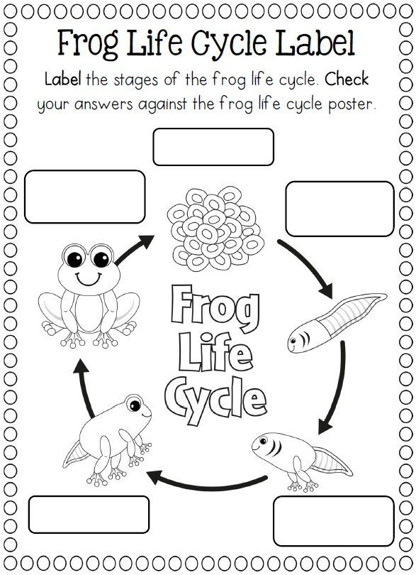 Life Cycle of a frog coloring page | Crafts and Worksheets for ...