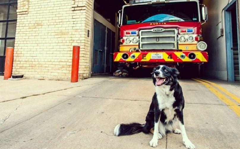 サイレンにおけるあなたの子犬の遠吠えは、彼らはただ、質問することができる場合には、「ねえ、どこに火です?」