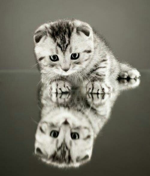 Kitty Reflections