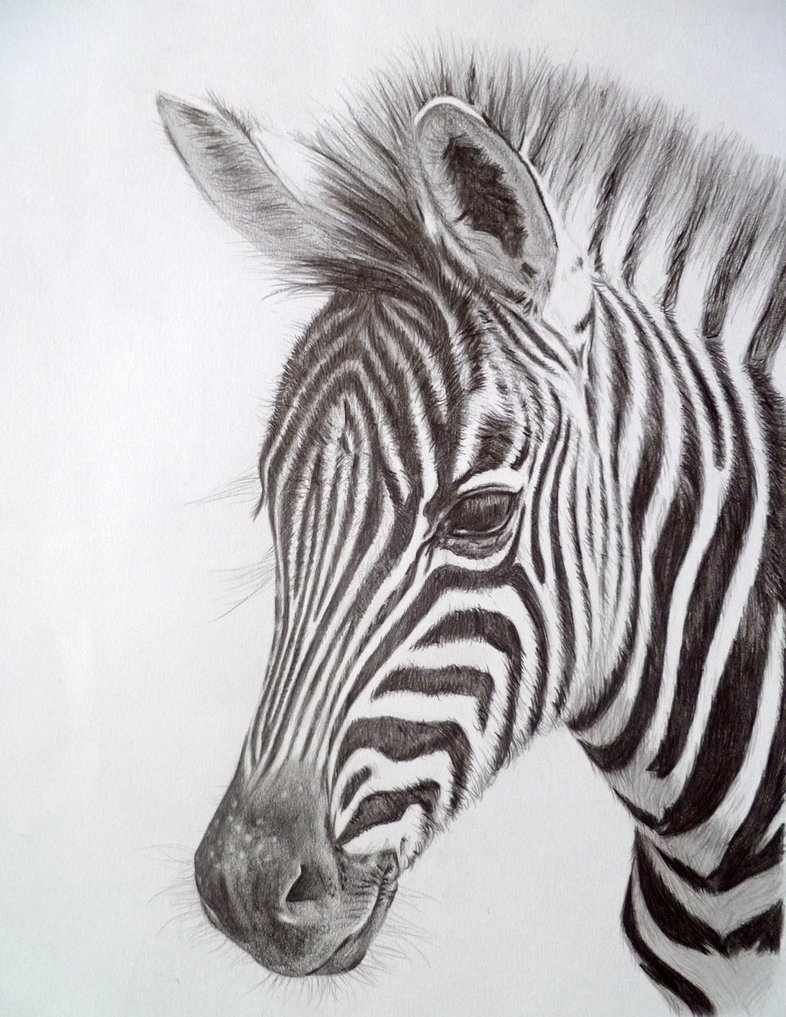 Pin by devyn siqueiros on sketches in 2019 zebra painting zebra