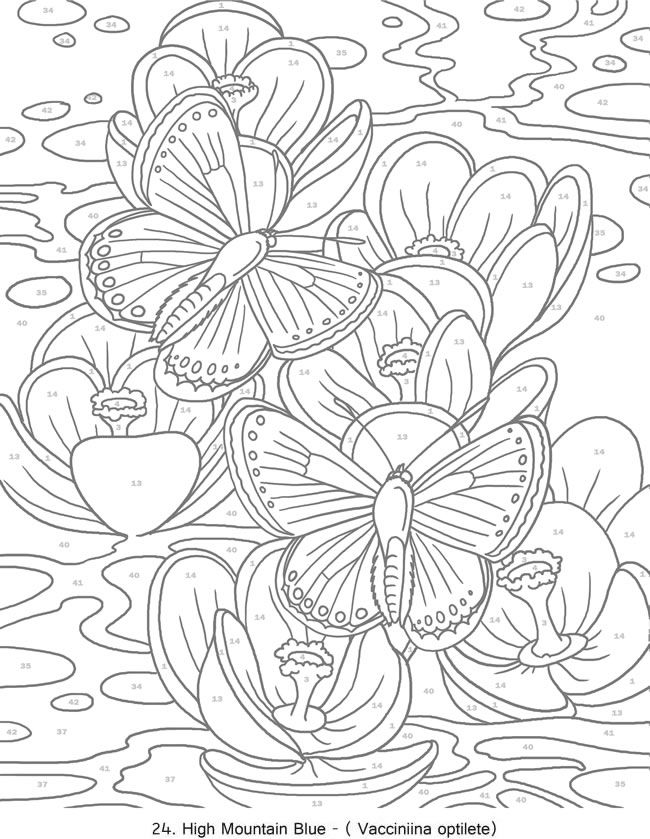 creative haven butterflies color by number coloring book butterfly