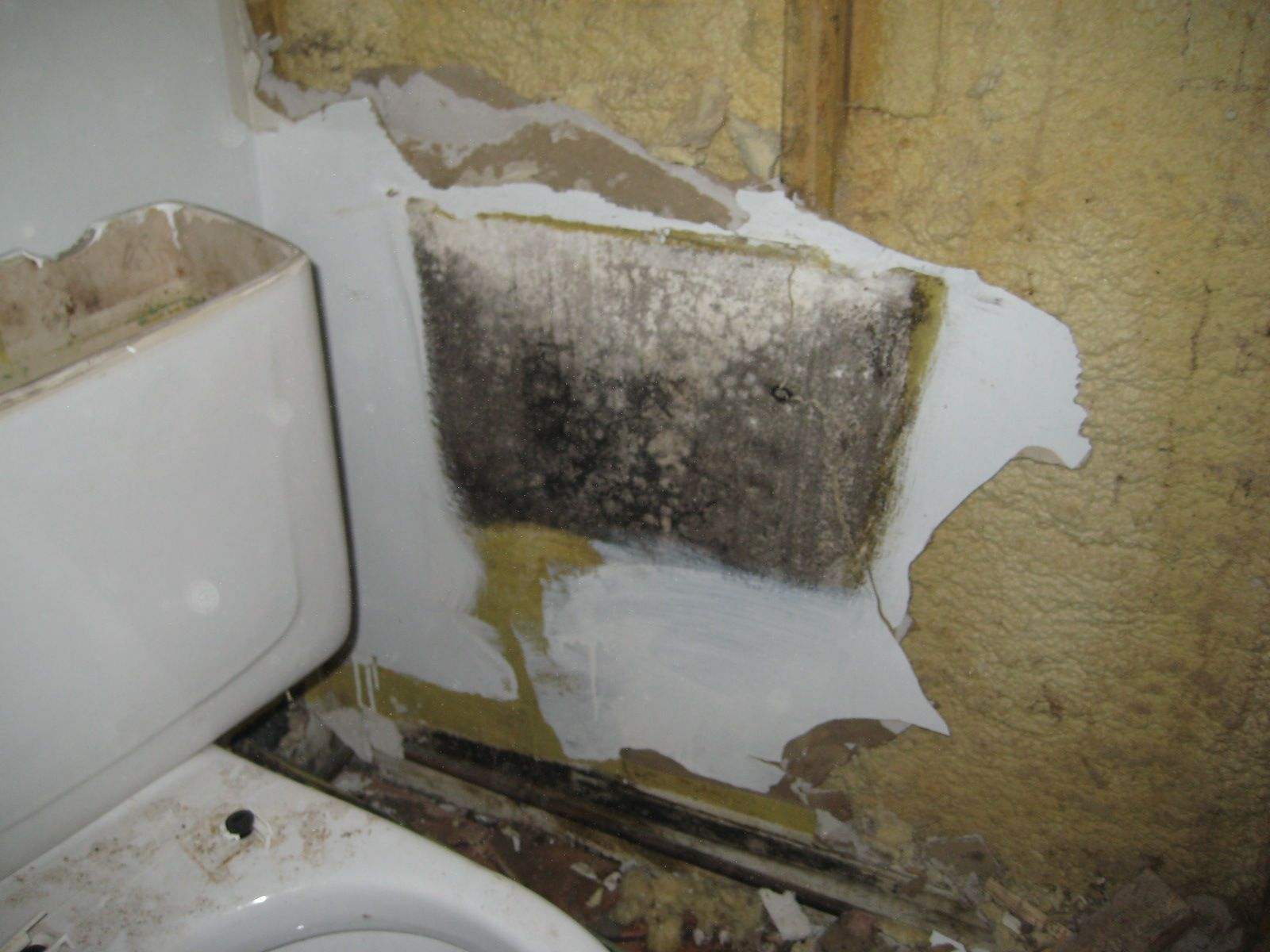 Black Mold Behind The Bathroom Wall. Just Because You Donu0027t See Mold,