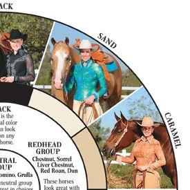 What color tack looks best on your horse?  Consult the Hobby Horse color wheel!