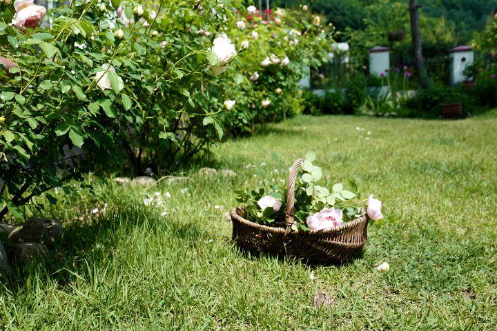 잠자리 바로 옆에 창이 있다. 눈을 뜨고 몸을 반쯤 일으켜 밖을 내다보면 그날 날씨가 어떤지 알 수 있다. 비가 적은 오월의 아침은 투명하고 서늘하다. 세탁기에 주섬주섬 세탁물을 넣고 마당으로 나가서 맨발에 이슬을 적시며 꽃들의 아침에 슬그머니 끼어든다. 꽃들은 졸인 잼처럼 응축된 진한 색으로 피어나서 날이 갈수록 점점 순해진다. 저러다가 결국에는 투명해져