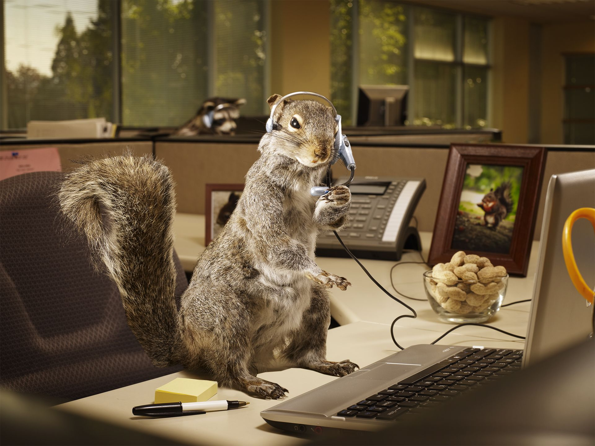 Another Day at the Office Squirrel, Lion sculpture, Cartoon