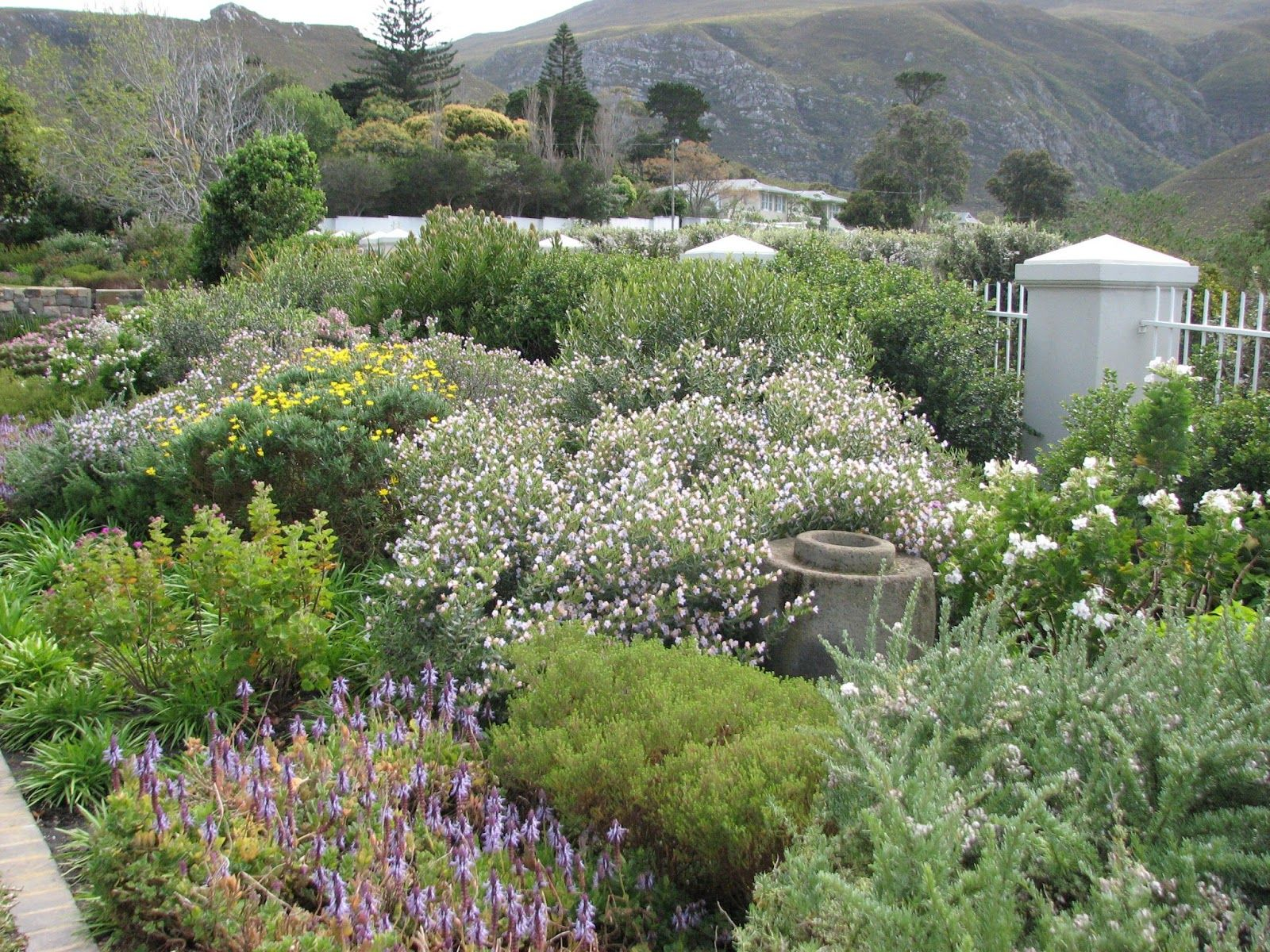 water wise garden designs. fynbos country cottage garden style  Planting textures Pinterest