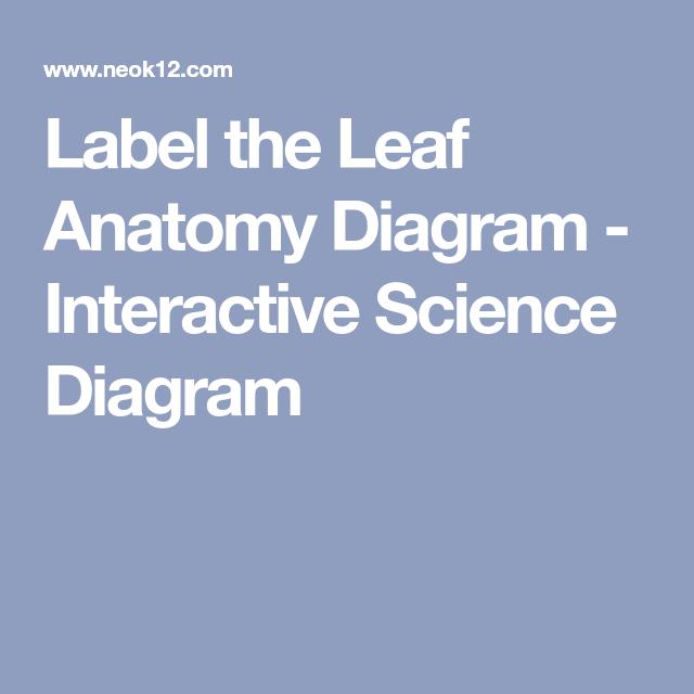 Label The Leaf Anatomy Diagram Interactive Science Diagram Hs