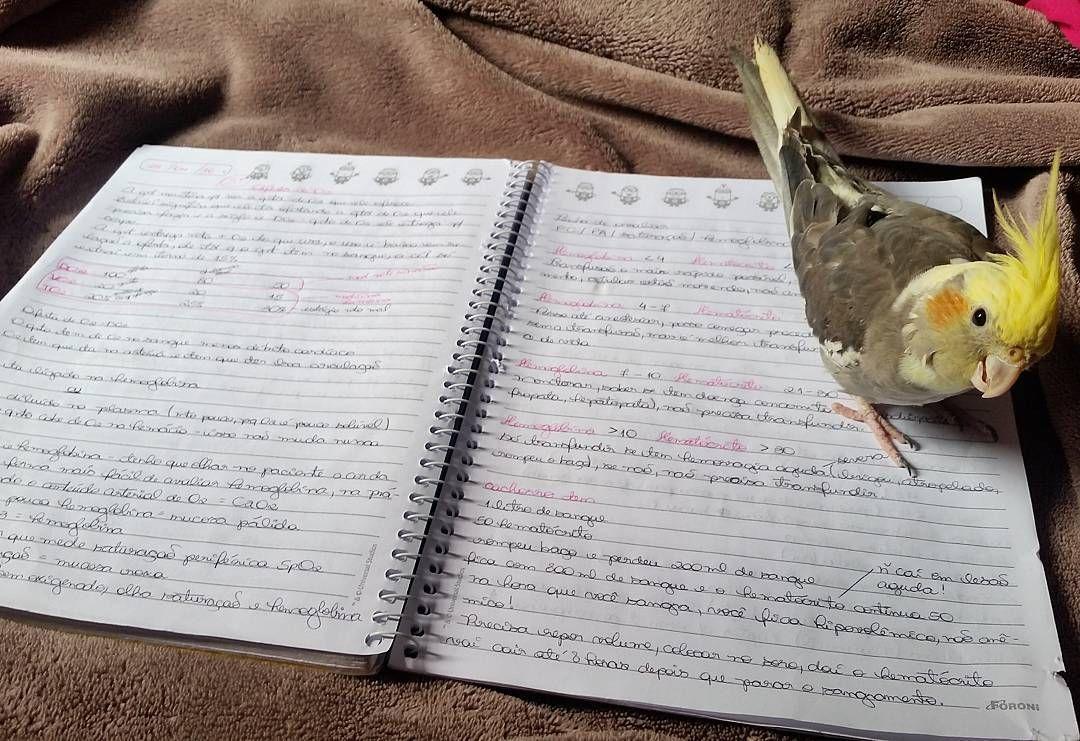 Mamãe esta cheia de provas da faculdade estou aqui dando um apoio psicológico pra ela...às vezes faço um  no caderno pra ela se distrair um pouquinho   #calopsita #cockatiel #cockatoo #parrot #budgie #pet #bird #animal #instacalopsita #instacockatiel #instacockatoo #instabudgie #instapet #instabird #instaanimal #instapsita #cockatielsofinstagram #cockatoosofinstagram #parrotsofinstagram #budgiesofinstagram #birdsofinstagram #animalsofinstagram by johnnybravocalopsita…