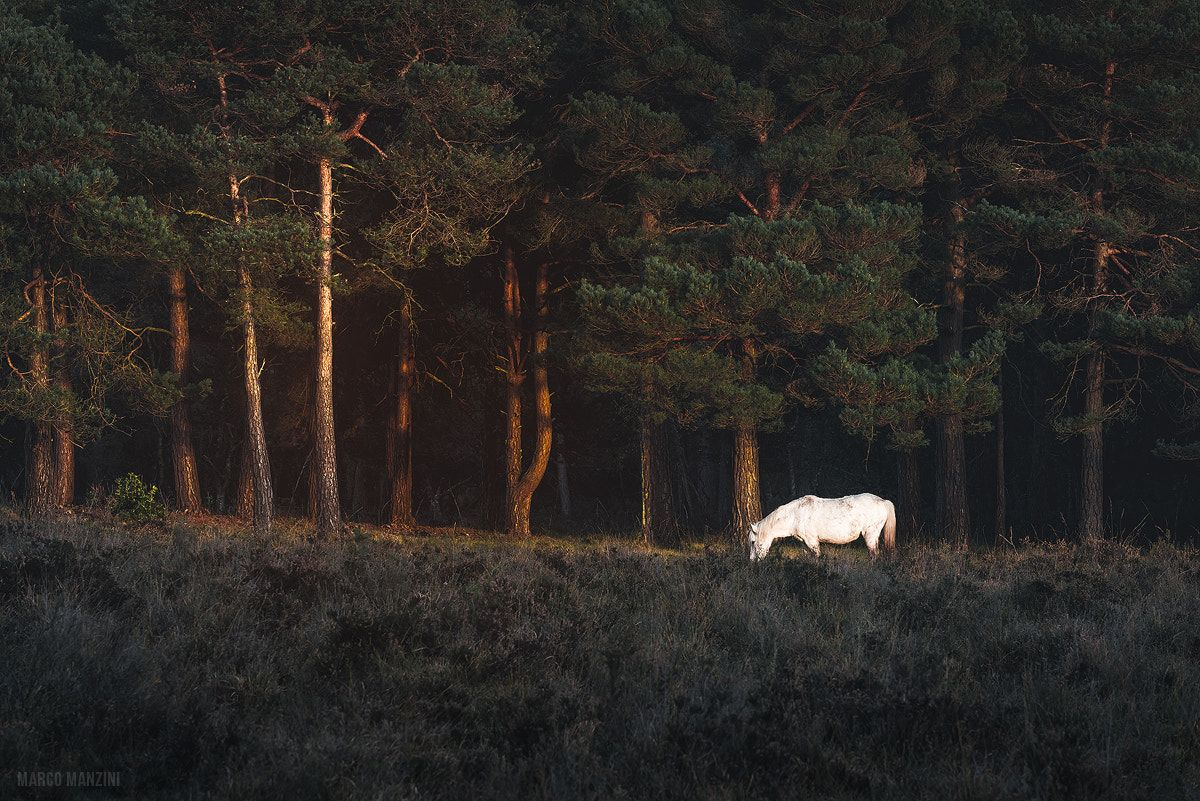 Pin By Marco Manzini On Marco Manzini Photography 500px White Horses Horses New Forest