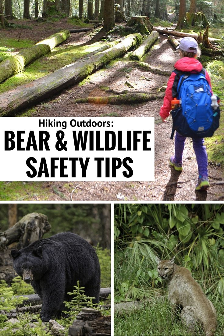 Hiking Outdoors Bear & Wildlife Safety Tips Hiking