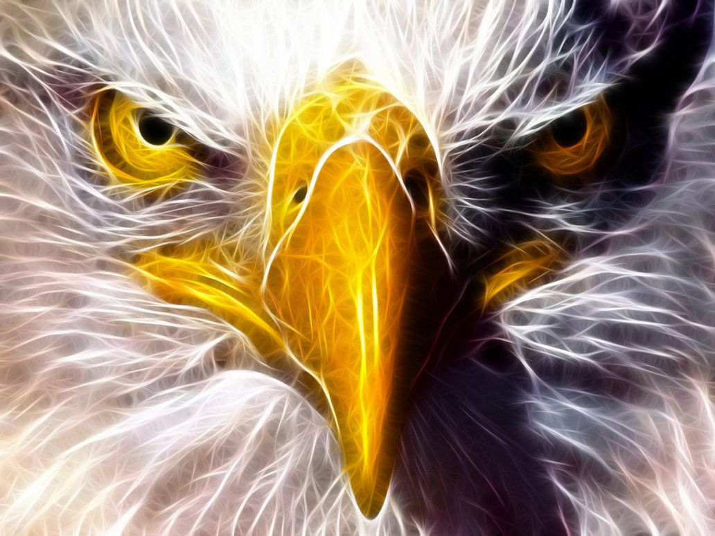 Eagle Eagle Eyes 2 By Akolita On Deviantart Eagle Face Eagle