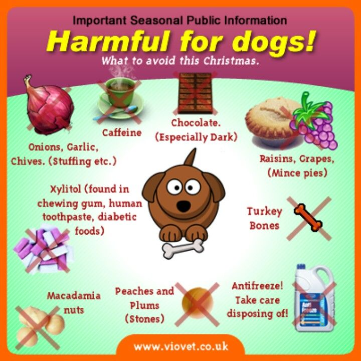 Toxic Foods For Dogs, Dog Food Recipes