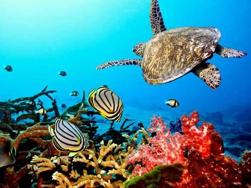 Bonaire, Underwater