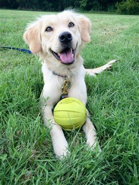Lola Has Been Adopted 1 Yr Old Golden Mix She Was An Owner